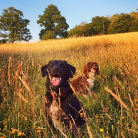 Leo and Popy in long grass summer 2014