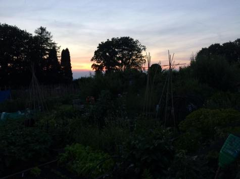 Allotment sunset