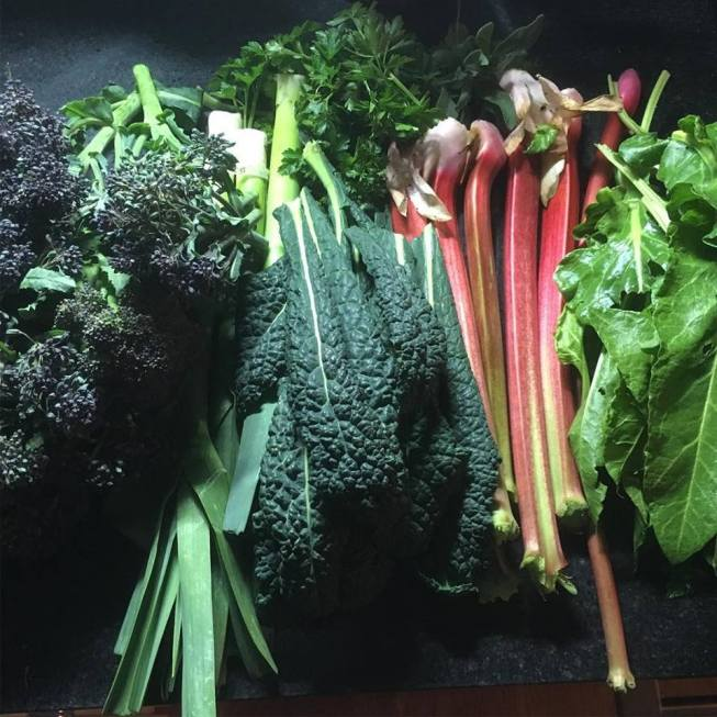 Allotment haul Mid-March 2019