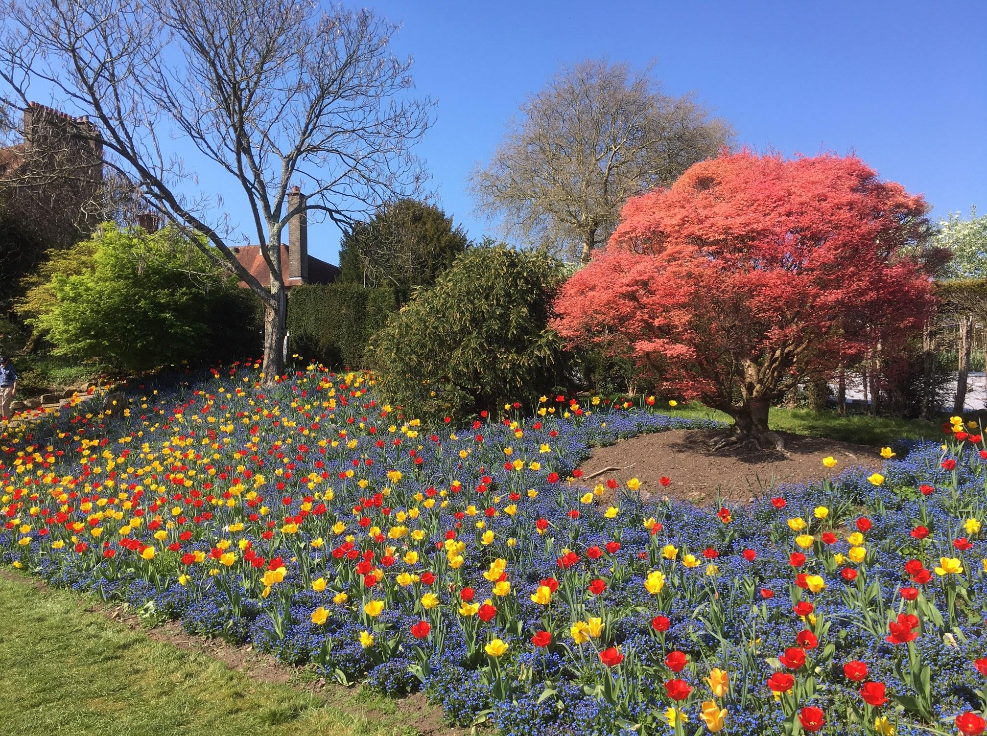 Standen technicolour tulips 2019